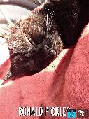 Lost Cat on 16 May. 2019 @ Chatsworth rd, hackney