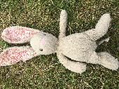 Found Cuddly bunny on 09 Jun. 2019 @ Great Notley Discovery Centre