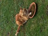Lost Cat on 03 May. 2019 @ B93 9EQ
