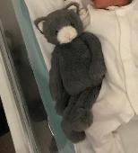 Lost Cuddly kitty on 13 Jun. 2019 @ Jarrow, uk