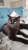 Lost Cat on 10 Jul. 2019 @ Copers Cope Road, Beckenham