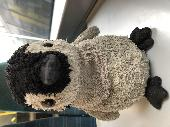 Found Cuddly toy on 15 Jul. 2019 @ Clapham junction railway station