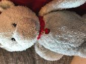 Lost Teddy bear on 13 Jul. 2019 @ Plymouth. Lockyers Quay Premier Inn near Sutton harb