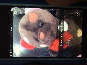 Lost Teddy bear on 21 Jul. 2019 @ Mount Airy NC