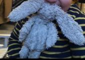 Lost Cuddly bunny on 10 Aug. 2019 @ Blackpool centre