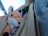 Lost Cuddly toy on 08 Aug. 2019 @ Boston Logan airport
