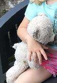 Lost Teddy bear on 13 Aug. 2019 @ Manchester Museum