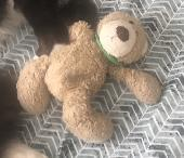 Lost Teddy bear on 21 Aug. 2019 @ Worcester