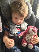 Lost Teddy bear on 21 Aug. 2019 @ Bournemouth upper gardens