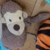 Lost Jellycat monkey on 04 Sep. 2019 @ Madrid airport - on Air Europa flight from Salvador
