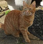 Lost Cat on 24 Aug. 2019 @ Cropredy Road, West Heath, Birmingham