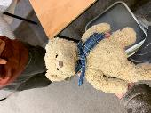 Lost Teddy bear on 21 Sep. 2019 @ Tibshelf Services, Northbound
