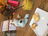 Lost Teddy doggy on 30 Sep. 2019 @ District line London