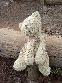 Lost Teddy bear on 08 Oct. 2019 @ Reynisfjara, Vik, Iceland