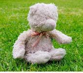 Lost Teddy bear on 12 Oct. 2019 @ Brighton or Cronulla