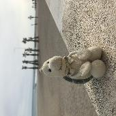Lost Cuddly toy on 16 Nov. 2019 @ Calle santo domingo, 03501 Benidorm, Alicante, Spain