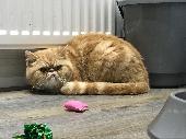 Lost Cat on 21 Nov. 2019 @ N5 1AS