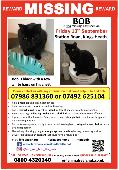 Lost Cat on 13 Sep. 2019 @ Station Road, Kings Heath, Birmingham, B14 7TF
