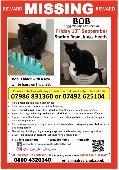 Lost Cat on 13 Sep. 2019 @ Station Road, Kings Heath, Birmingham, B14 7TF