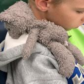 Lost Teddy bear on 08 Dec. 2019 @ Glenview, IL
