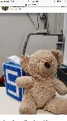 Found Teddy bear on 22 Jan. 2020 @ Sequoyah hills elementary