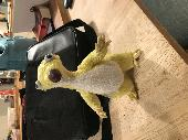 Found Cuddly toy on 01 Jan. 2020 @ A4130