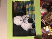 Lost Teddy bear on 02 Jul. 2015 @ Bahamas