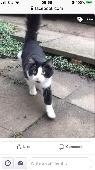 Lost Black & White Cat on 13 Mar. 2020 @ Me7 4hw