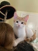 Lost Cat on 22 May. 2020 @ 29 Pember Road London NW105LT