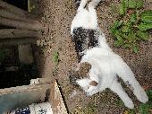 Lost Cat on 22 May. 2020 @ 129 Langley Crescent RM9 4RX Dagenham