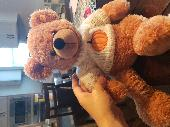 Lost Teddy bear on 30 May. 2020 @ I-40 west, rest stop outside of Raleigh nc