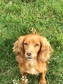 Lost Other on 02 Jun. 2020 @ North Tawton, Devon, UK, EX20 2DH
