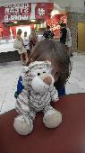 Lost Cuddly toy on 04 Sep. 2017 @ Caribe Royale Orlando