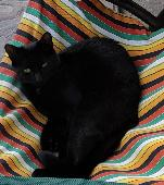 Lost Black Cat on 28 Jun. 2020 @ Estuary park combwich