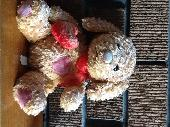 Found Teddy bear on 20 Jul. 2020 @ Sneyd Hill Park Stoke on Trent