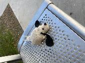 Found Stuffed dog on 26 Jul. 2020 @ 5757 w Thunderbird rd Phoenix AZ 85306