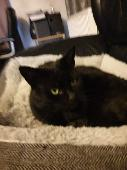 Lost Black Cat on 27 Jul. 2020 @ DN68BB