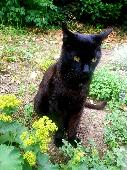 Lost Black Cat on 19 Jul. 2020 @ from Meanwhile Gardens, W10 5FR