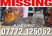 Lost Cat on 24 Sep. 2020 @ Woodgrange Drive, Southchurch, Southend on Sea SS1