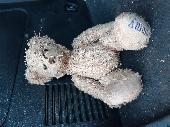 Found Teddy bear on 19 Nov. 2020 @ South Bay John Fowler holiday park