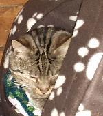 Lost Cat on 10 Nov. 2020 @ B23 7YT