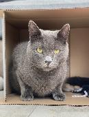 Lost Cat on 13 Nov. 2020 @ Crowlas, Penzance