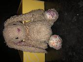 Found Cuddly bunny on 29 Nov. 2020 @ Kingston upon Thames