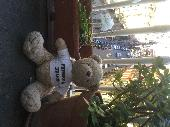 Lost Teddy bear on 02 Jan. 2019 @ Bilbao
