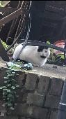 Found Cat on 12 Jan. 2021 @ N5