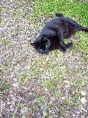 Lost Cat on 10 Jan. 2021 @ Nr33 8jl