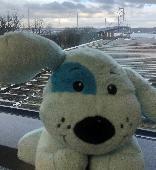 Found Stuffed dog on 02 Jan. 2021 @ Queensferry Crossing