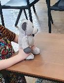 Lost Teddy bear on 24 Jan. 2021 @ Stafford rd, stafford qld 4053