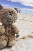 Lost Teddy bear on 06 Aug. 2018 @ Los Angeles or on the airplane
