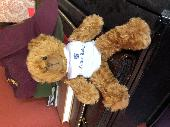 Found Teddy bear on 17 Mar. 2021 @ Hurlingham Rd, London, SW6